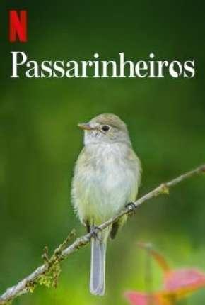 Passarinheiros - Birders Download