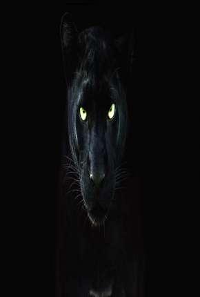 Pantera Negra - O Reino Selvagem Download