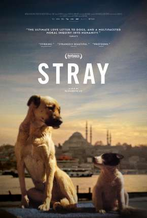 Stray - 2021 Legendado Download